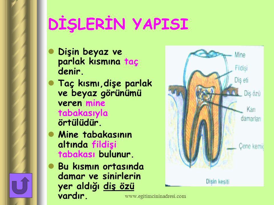 DİŞLER Dişler besinleri koparıp parçalama,çiğneme,öğütme işlerini yapar. Kesici dişler besini kesmeye,köpek dişleri parçalamaya,azı dişleri ise parçal