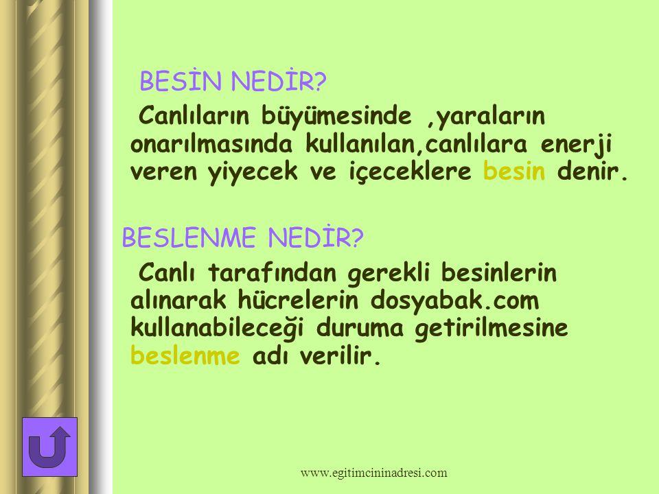 BESİNLER www.egitimcininadresi.com