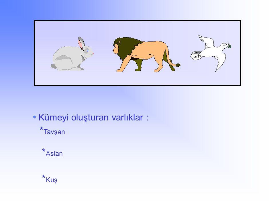 * Tavşan * Aslan * Kuş