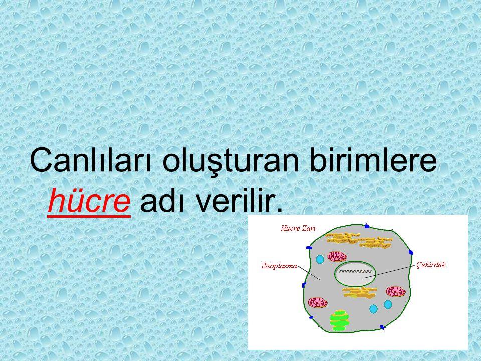 Canlıları oluşturan birimlere hücre adı verilir.