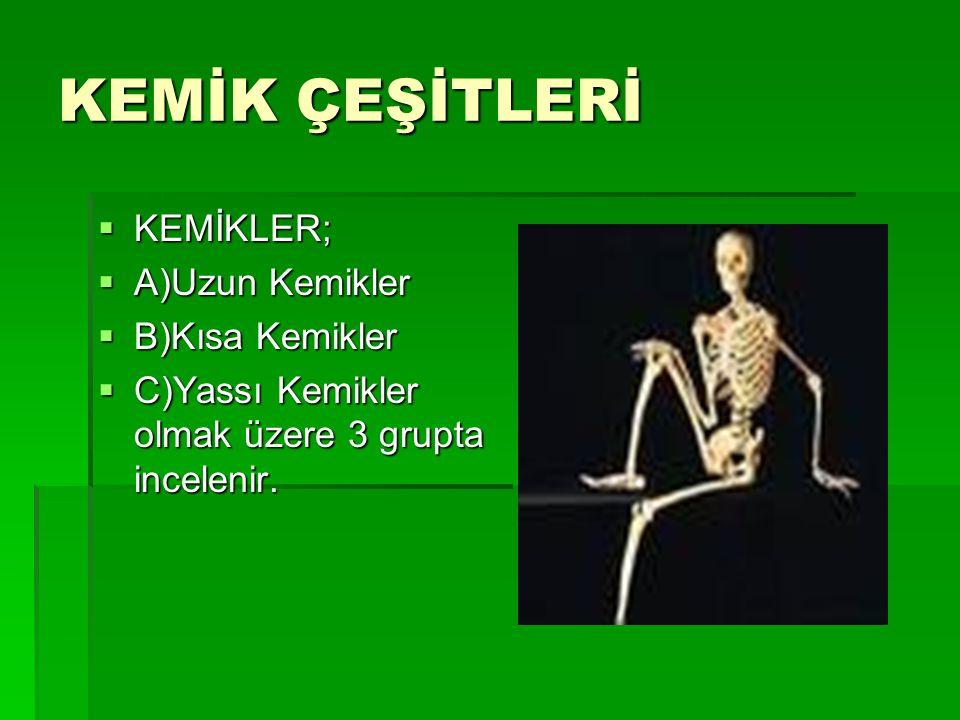 KEMİK ÇEŞİTLERİ KKKKEMİKLER; AAAA)Uzun Kemikler BBBB)Kısa Kemikler CCCC)Yassı Kemikler olmak üzere 3 grupta incelenir.