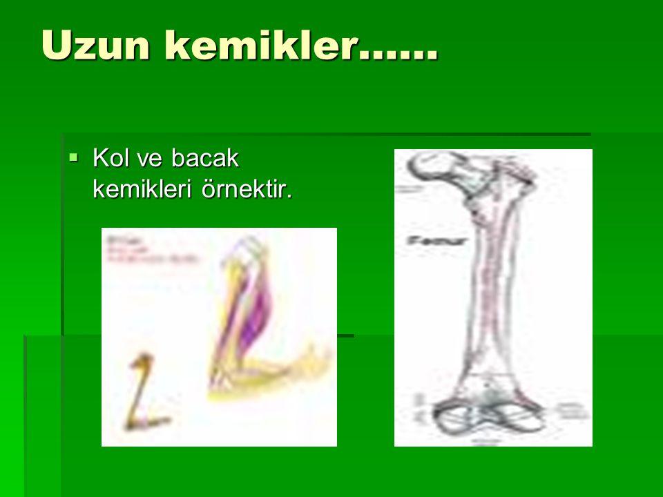 Uzun kemikler……  Kol ve bacak kemikleri örnektir.