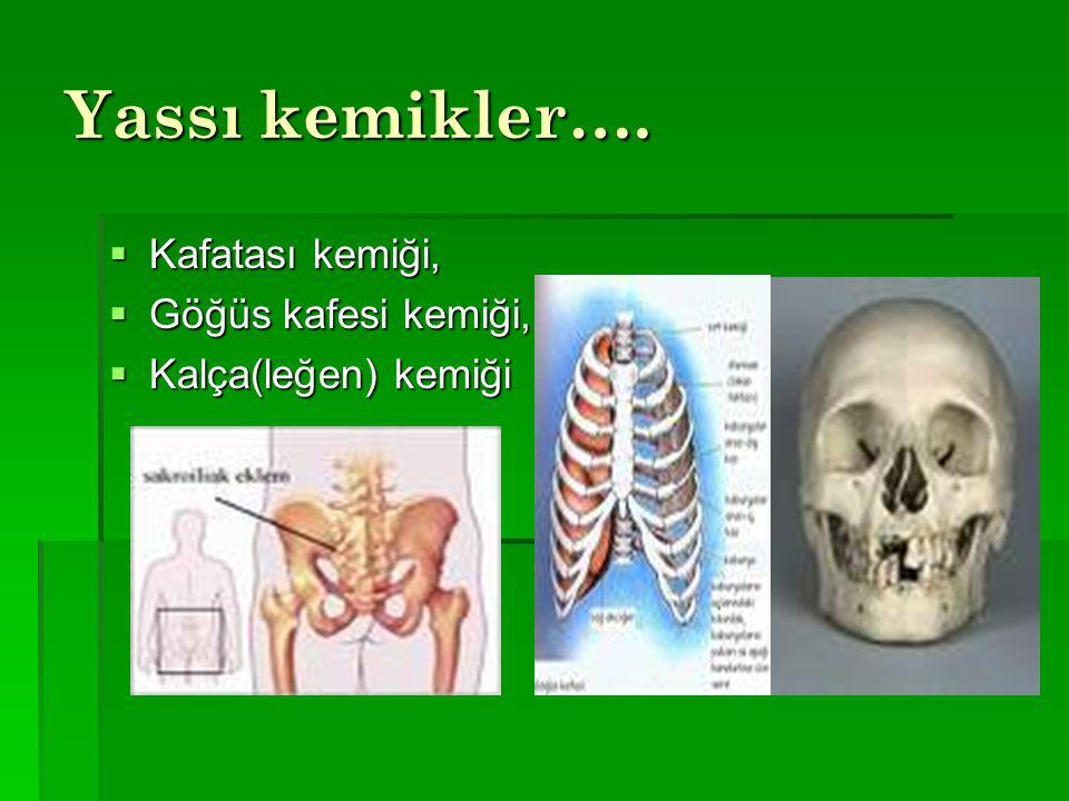 Yassı kemikler….  Kafatası kemiği,  Göğüs kafesi kemiği,  Kalça(leğen) kemiği
