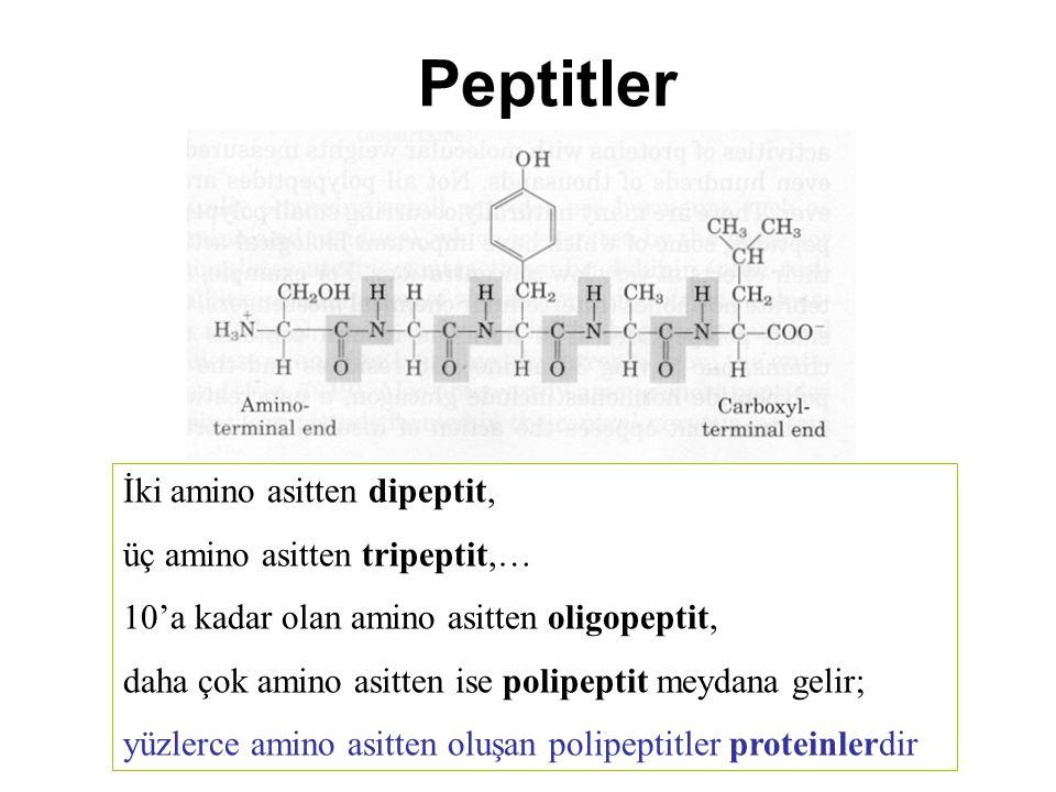 Peptitler İki amino asitten dipeptit, üç amino asitten tripeptit,… 10'a kadar olan amino asitten oligopeptit, daha çok amino asitten ise polipeptit me