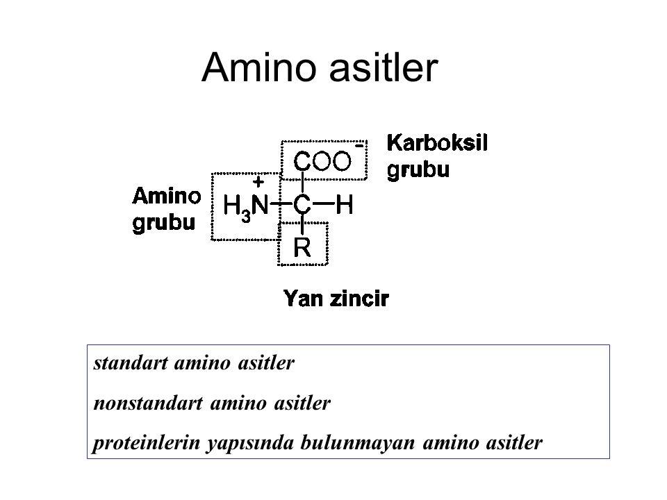 Amino asitler standart amino asitler nonstandart amino asitler proteinlerin yapısında bulunmayan amino asitler
