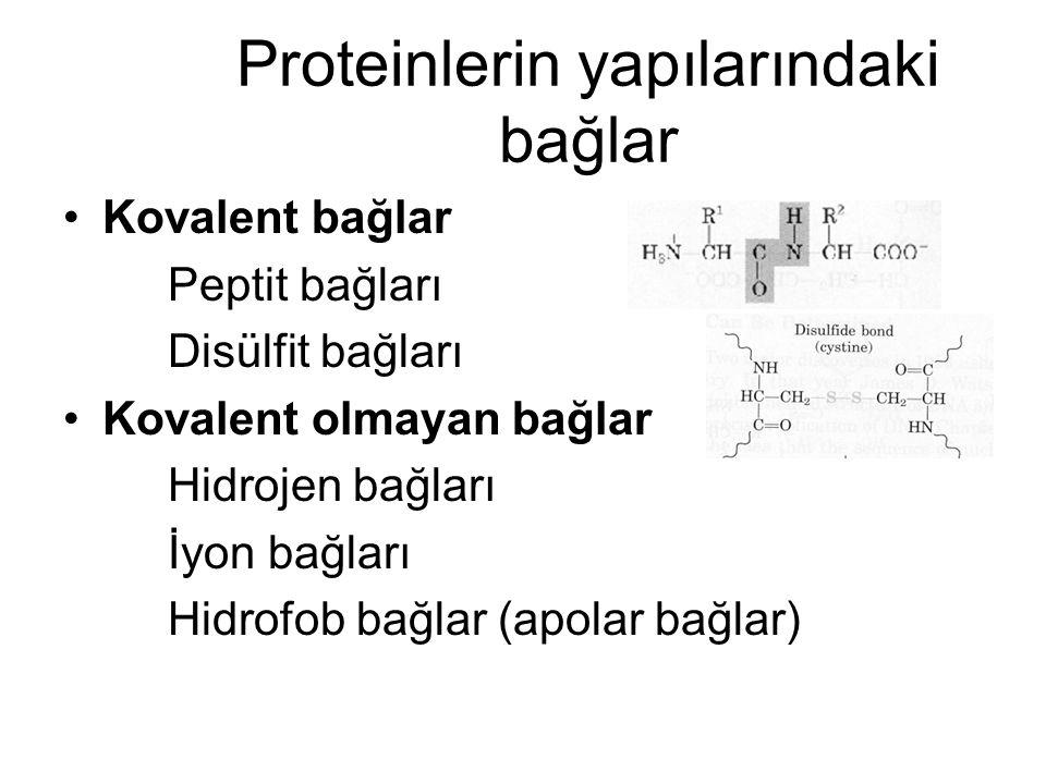 Proteinlerin yapılarındaki bağlar Kovalent bağlar Peptit bağları Disülfit bağları Kovalent olmayan bağlar Hidrojen bağları İyon bağları Hidrofob bağla