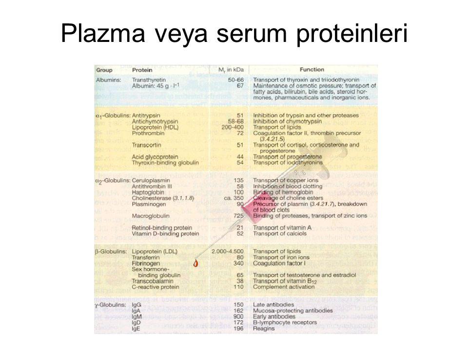 Plazma veya serum proteinleri