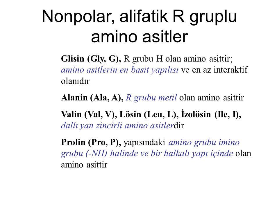 Glisin (Gly, G), R grubu H olan amino asittir; amino asitlerin en basit yapılısı ve en az interaktif olanıdır Alanin (Ala, A), R grubu metil olan amin