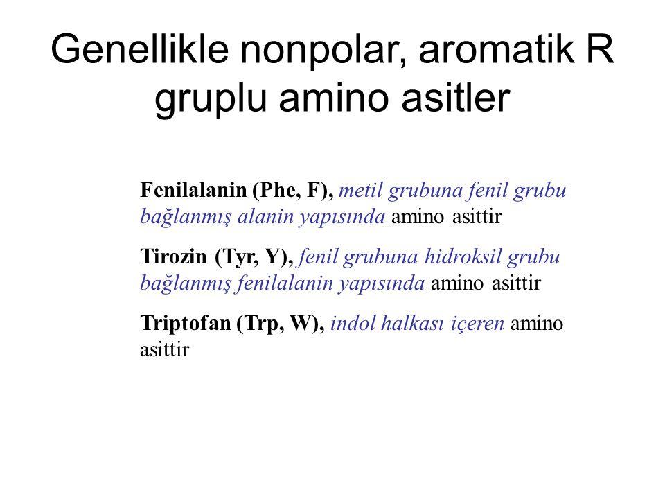 Fenilalanin (Phe, F), metil grubuna fenil grubu bağlanmış alanin yapısında amino asittir Tirozin (Tyr, Y), fenil grubuna hidroksil grubu bağlanmış fen
