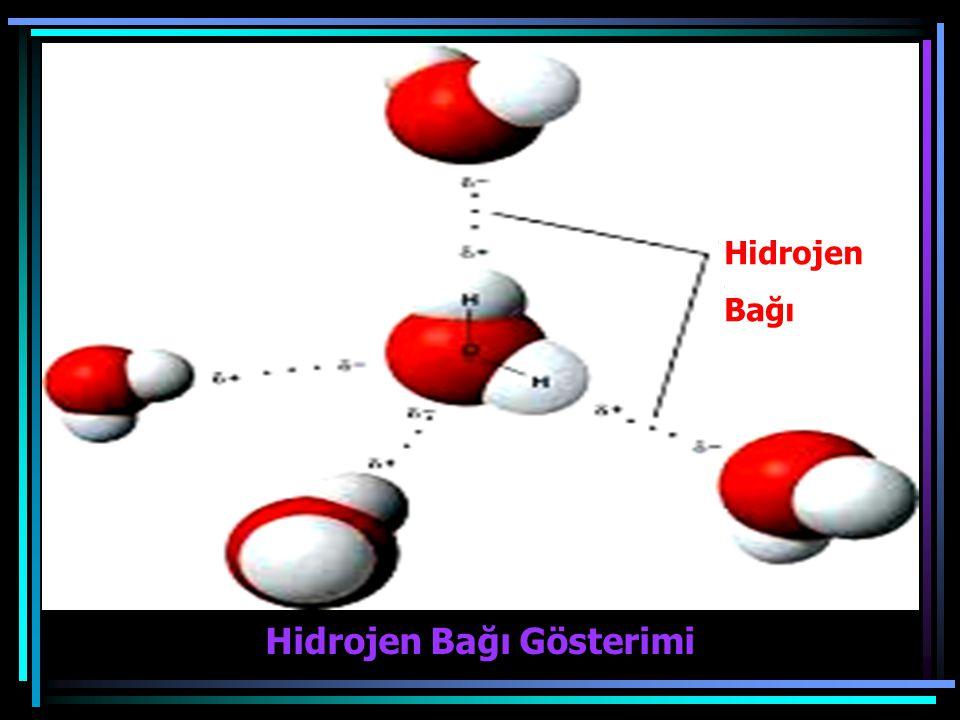 Hidrojen Bağı Hidrojen Bağı Gösterimi
