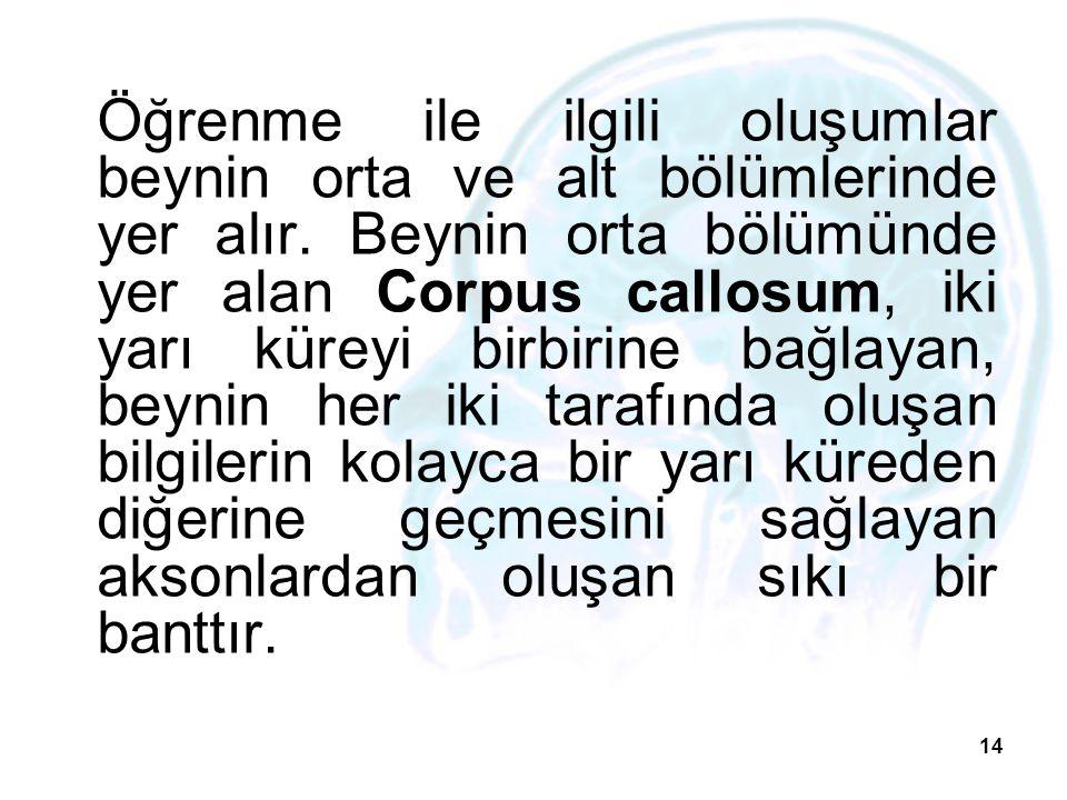 14 Öğrenme ile ilgili oluşumlar beynin orta ve alt bölümlerinde yer alır. Beynin orta bölümünde yer alan Corpus callosum, iki yarı küreyi birbirine ba