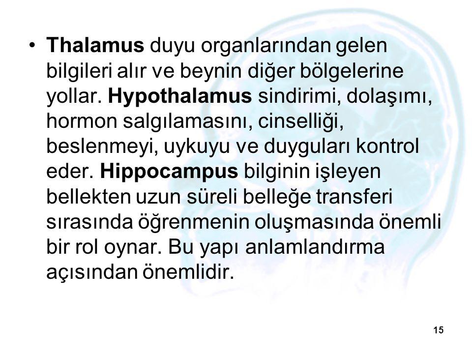 Thalamus duyu organlarından gelen bilgileri alır ve beynin diğer bölgelerine yollar. Hypothalamus sindirimi, dolaşımı, hormon salgılamasını, cinselliğ