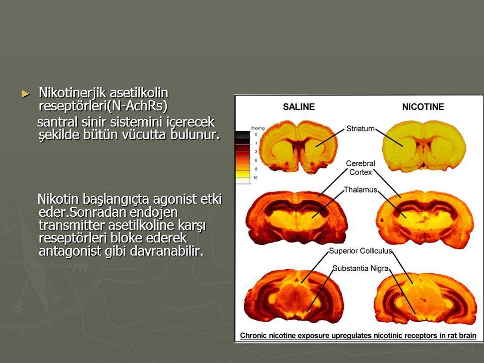 ► Nikotinerjik asetilkolin reseptörleri(N-AchRs) santral sinir sistemini içerecek şekilde bütün vücutta bulunur. santral sinir sistemini içerecek şeki
