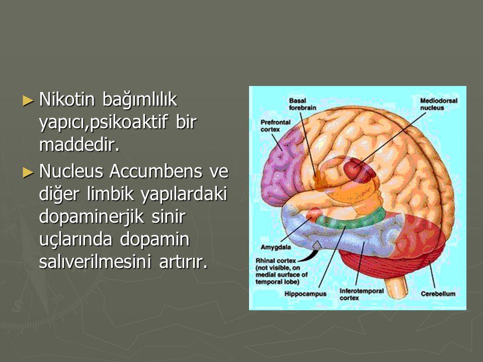 ► Nikotin bağımlılık yapıcı,psikoaktif bir maddedir. ► Nucleus Accumbens ve diğer limbik yapılardaki dopaminerjik sinir uçlarında dopamin salıverilmes