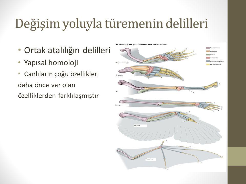 Değişim yoluyla türemenin delilleri Ortak atalılığın delilleri Yapısal homoloji Canlıların çoğu özellikleri daha önce var olan özelliklerden farklılaşmıştır