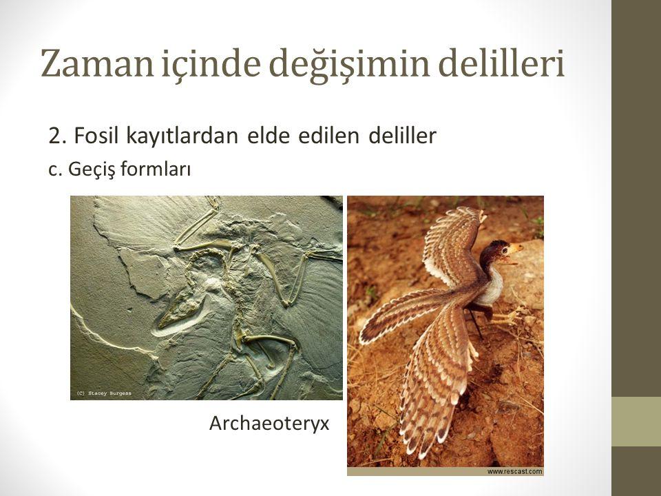 Zaman içinde değişimin delilleri 2.Fosil kayıtlardan elde edilen deliller c.