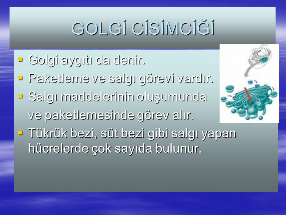 GOLGİ CİSİMCİĞİ  Golgi aygıtı da denir. Paketleme ve salgı görevi vardır.
