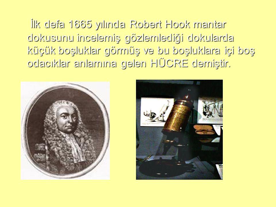 İlk defa 1665 yılında Robert Hook mantar dokusunu incelemiş gözlemlediği dokularda küçük boşluklar görmüş ve bu boşluklara içi boş odacıklar anlamına gelen HÜCRE demiştir.