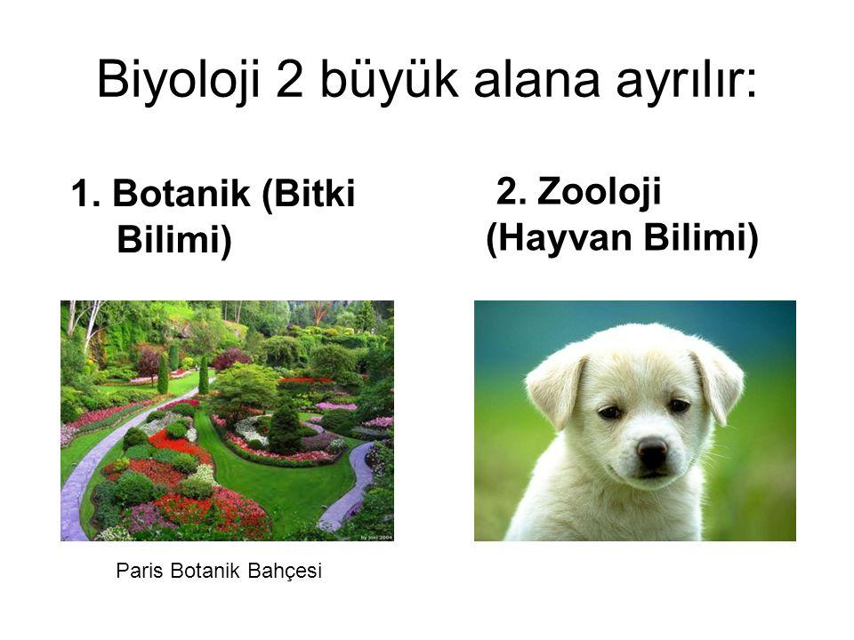 Biyoloji 2 büyük alana ayrılır: 1.Botanik (Bitki Bilimi) 2.