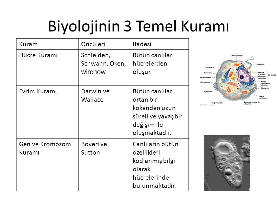Biyolojinin 3 Temel Kuramı KuramÖncüleriİfadesi Hücre KuramıSchleiden, Schwann, Oken, wirchow Bütün canlılar hücrelerden oluşur.
