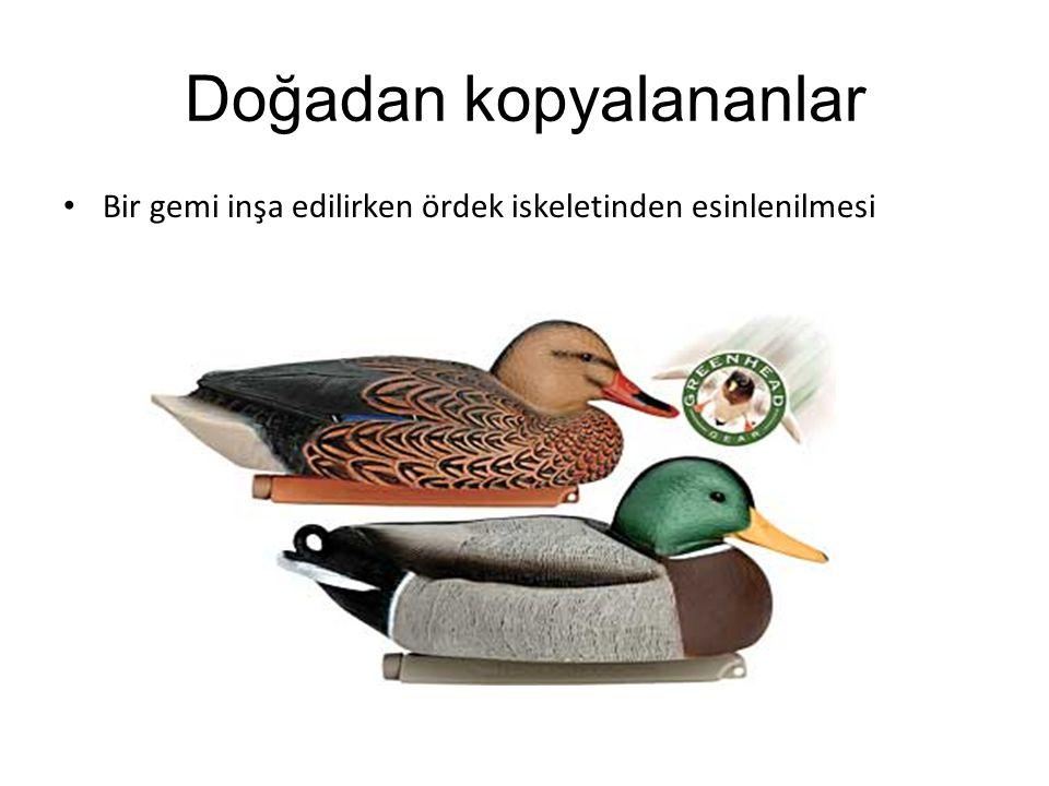 Doğadan kopyalananlar Bir gemi inşa edilirken ördek iskeletinden esinlenilmesi