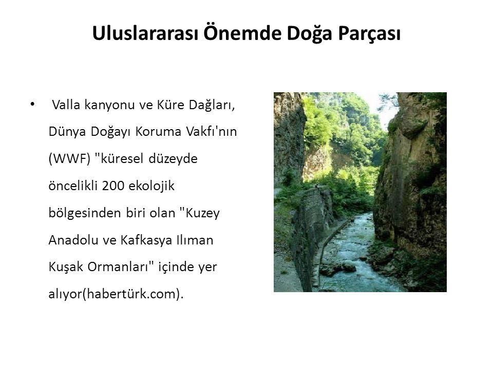 Uluslararası Önemde Doğa Parçası Valla kanyonu ve Küre Dağları, Dünya Doğayı Koruma Vakfı nın (WWF) küresel düzeyde öncelikli 200 ekolojik bölgesinden biri olan Kuzey Anadolu ve Kafkasya Ilıman Kuşak Ormanları içinde yer alıyor(habertürk.com).
