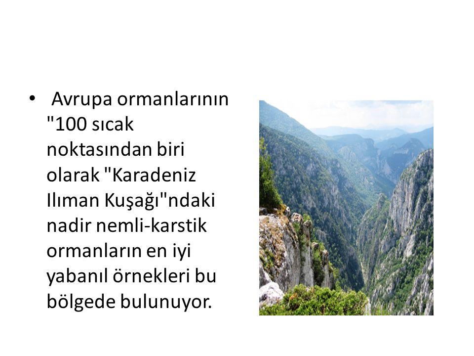 Avrupa ormanlarının 100 sıcak noktasından biri olarak Karadeniz Ilıman Kuşağı ndaki nadir nemli-karstik ormanların en iyi yabanıl örnekleri bu bölgede bulunuyor.