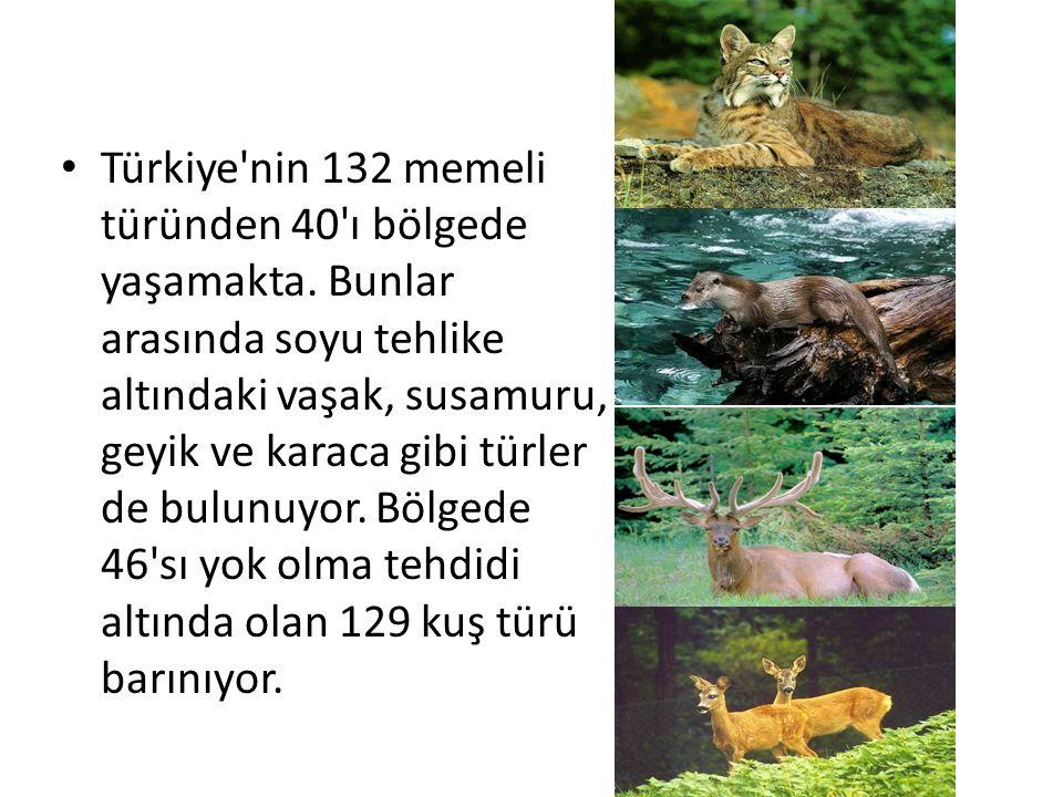 Türkiye nin 132 memeli türünden 40 ı bölgede yaşamakta.