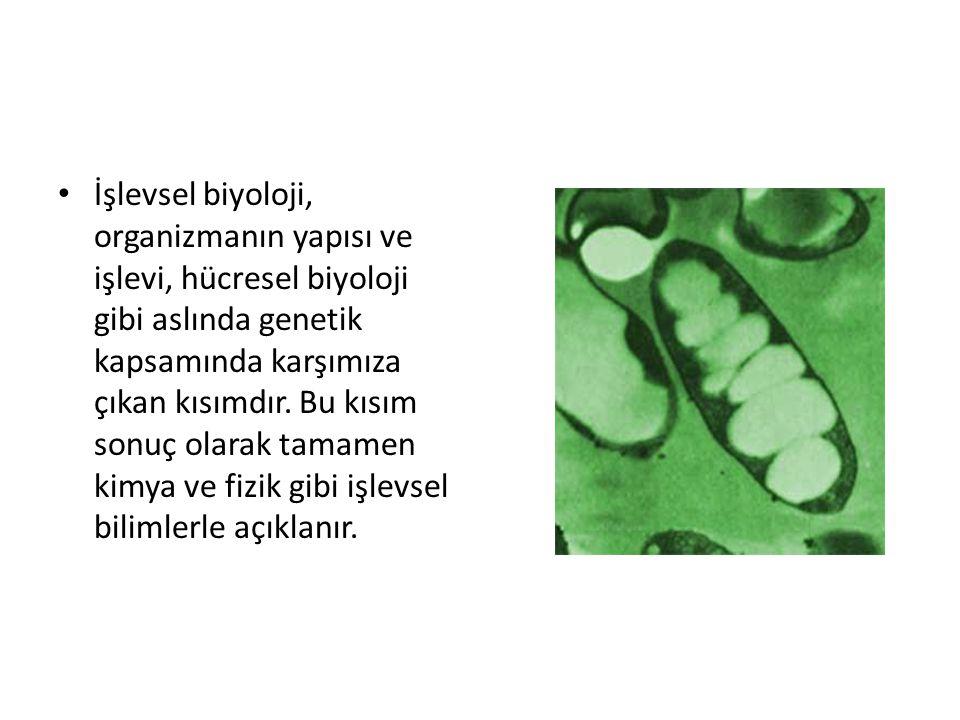 İşlevsel biyoloji, organizmanın yapısı ve işlevi, hücresel biyoloji gibi aslında genetik kapsamında karşımıza çıkan kısımdır.