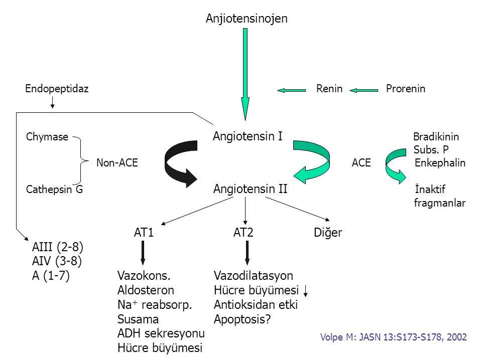 Anjiotensinojen Endopeptidaz Renin Prorenin Chymase Angiotensin I Bradikinin Subs. P Non-ACE ACE Enkephalin Cathepsin G Angiotensin II İnaktif fragman