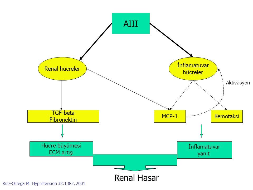 AIII Renal hücreler İnflamatuvar hücreler TGF-beta Fibronektin MCP-1Kemotaksi Hücre büyümesi ECM artışı İnflamatuvar yanıt Renal Hasar Aktivasyon Ruiz
