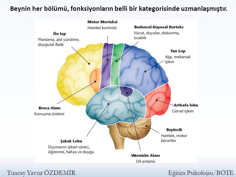 Beynin her bölümü, fonksiyonların belli bir kategorisinde uzmanlaşmıştır. Tuncay Yavuz ÖZDEMİR Eğitim Psikolojisi/BÖTE