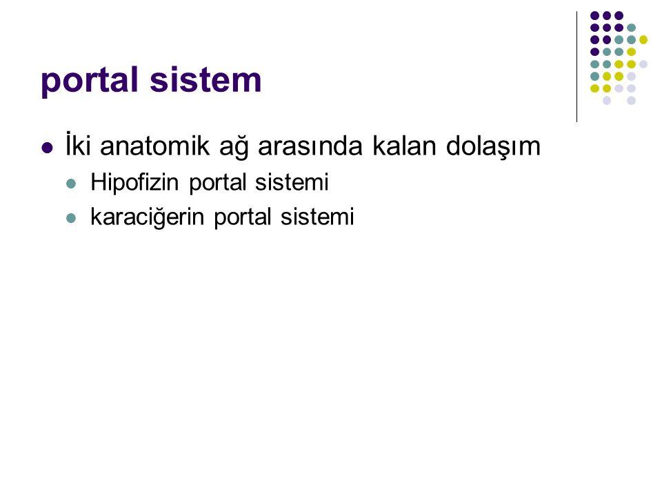 portal sistem İki anatomik ağ arasında kalan dolaşım Hipofizin portal sistemi karaciğerin portal sistemi