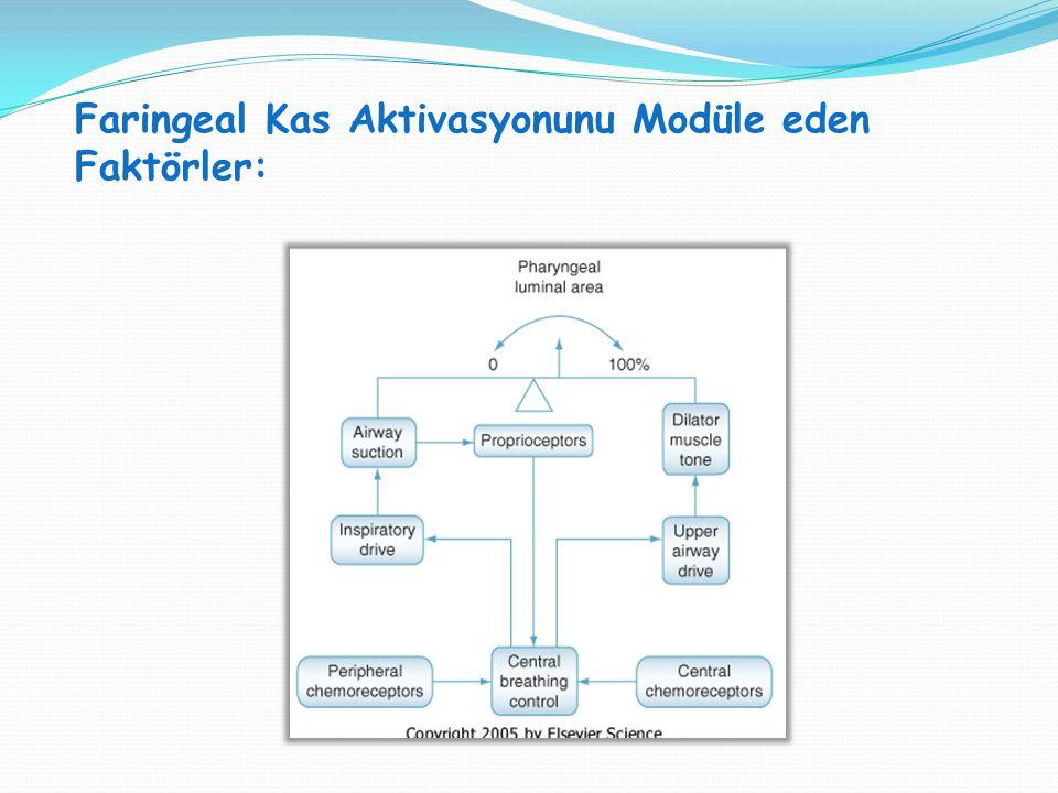 Faringeal Kas Aktivasyonunu Modüle eden Faktörler: SVT H : SVT V = 1:1