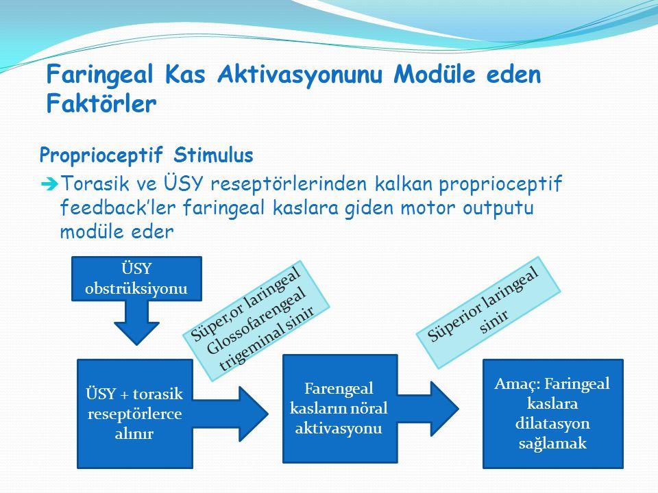 Faringeal Kas Aktivasyonunu Modüle eden Faktörler SVT H : SVT V = 1:1 Proprioceptif Stimulus  Torasik ve ÜSY reseptörlerinden kalkan proprioceptif fe
