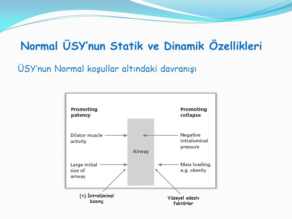 Normal ÜSY'nun Statik ve Dinamik Özellikleri SVT H : SVT V = 1:1 ÜSY'nun Normal koşullar altındaki davranışı (+) İntralüminal basınç Yüzeyel adeziv fa