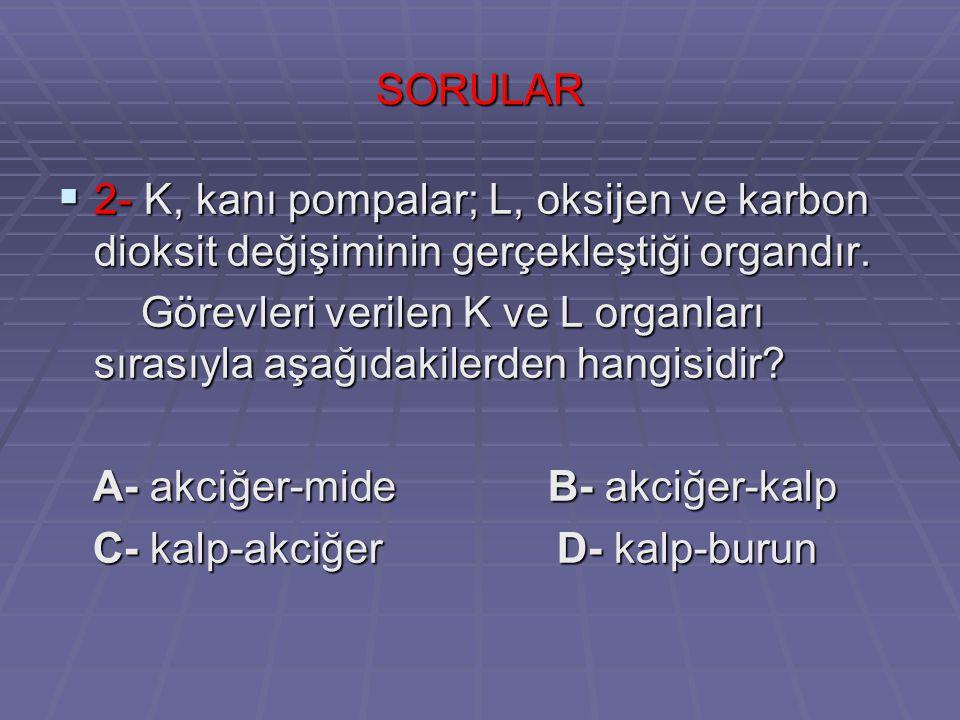 SORULAR  3- Aşağıdaki yapı ya da organlardan hangisi soluk alıp vermede görevli değildir.