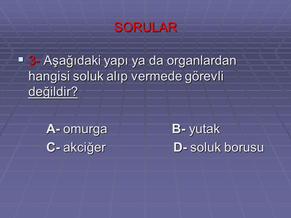 SORULARIN CEVABI 1- A 1- A 2- C 2- C 3- A 3- A