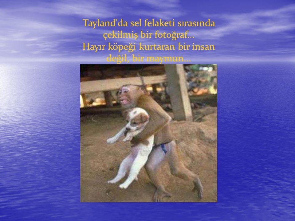 Tayland'da sel felaketi sırasında çekilmiş bir fotoğraf... Hayır köpeği kurtaran bir insan değil, bir maymun...