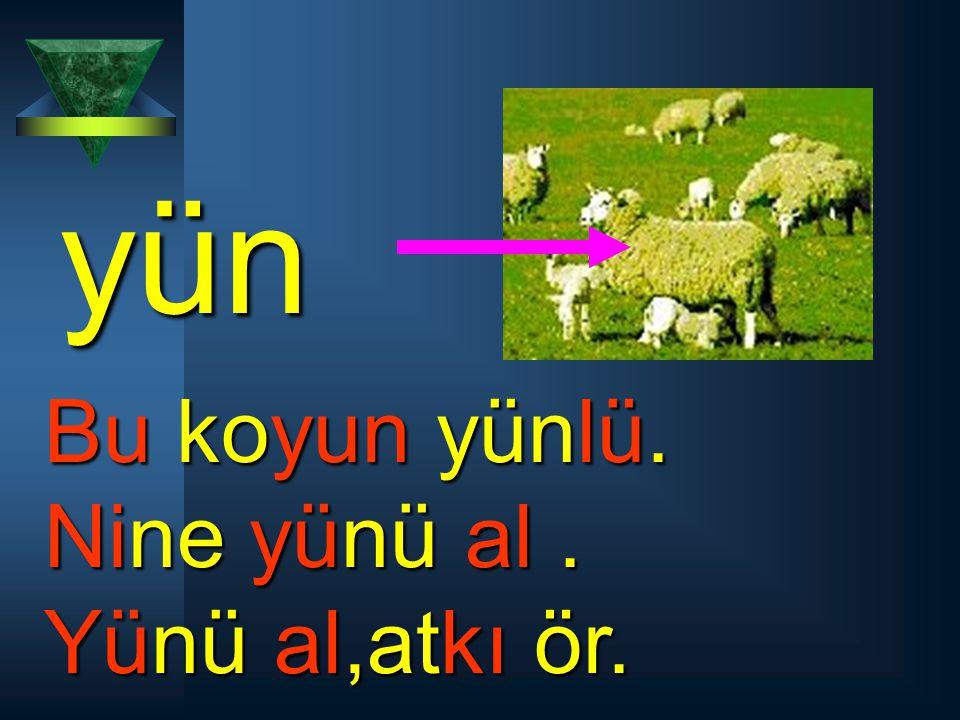 yün Bu koyun yünlü. Nine yünü al. Yünü al,atkı ör.