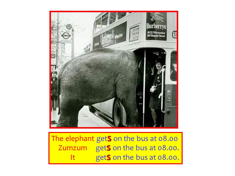 S The elephant getS on the bus at 08.00 S Zumzum getS on the bus at 08.00.