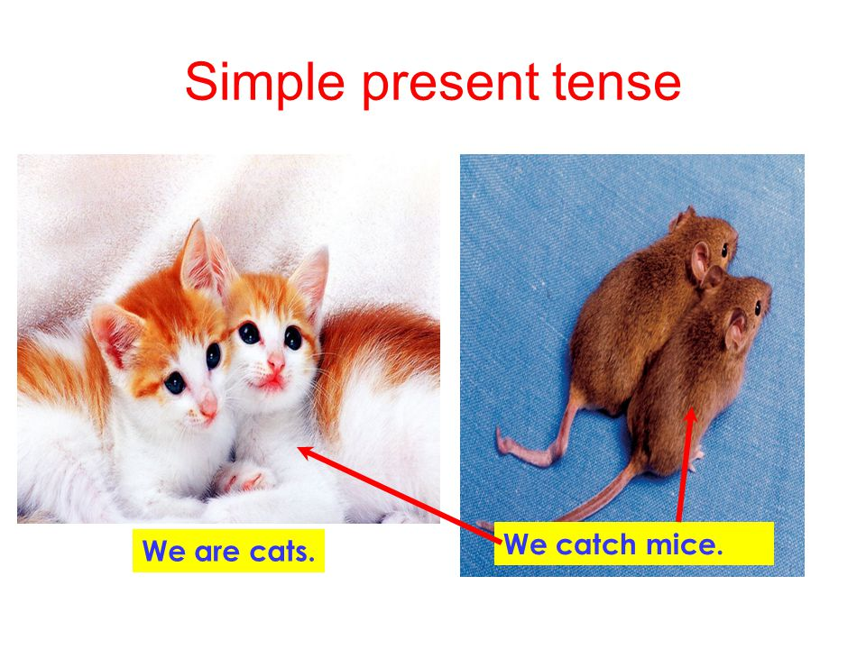 Simple present tense I pull out teeth. I am a dentist. A tooth