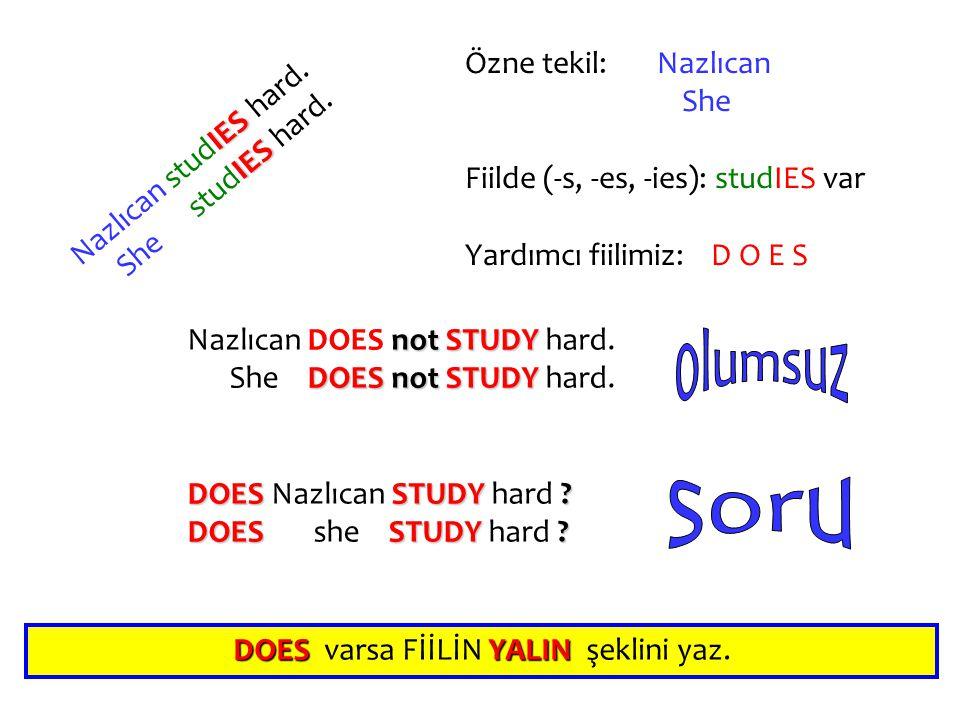 N a z l ı c a n s t u d I E S h a r d. S h e s t u d I E S h a r d. Nazlıcan DOES n nn not S SS STUDY hard. She D OES n nn not S SS STUDY hard. DOES N