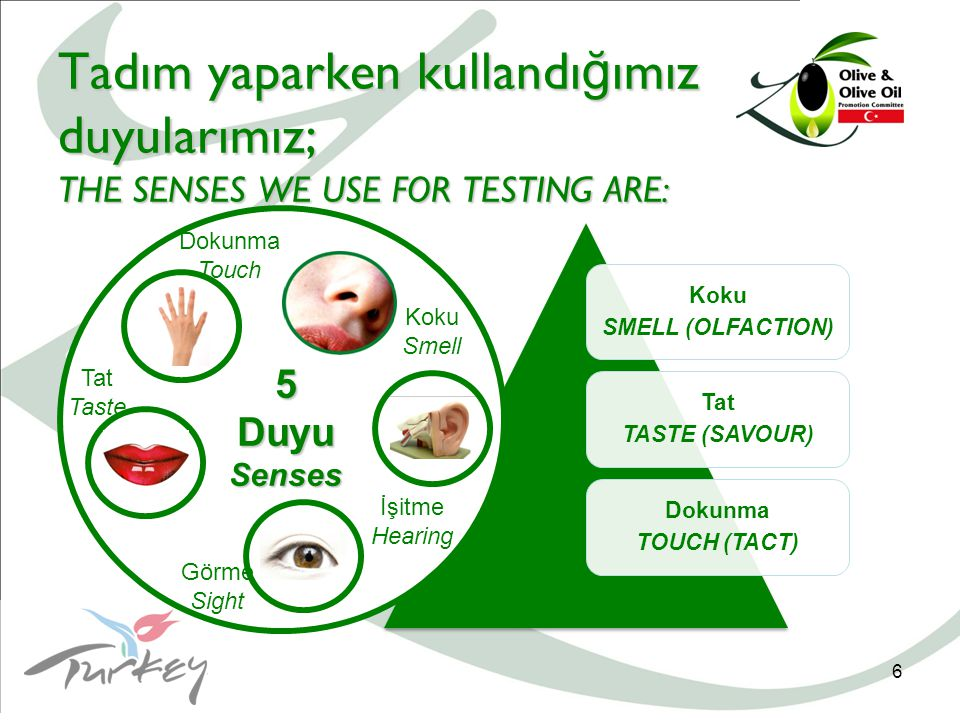 6 Koku SMELL (OLFACTION) Tat TASTE (SAVOUR) Dokunma TOUCH (TACT) Tadım yaparken kullandı ğ ımız duyularımız; THE SENSES WE USE FOR TESTING ARE: 5DuyuSenses Görme Sight İşitme Hearing Tat Taste Dokunma Touch Koku Smell