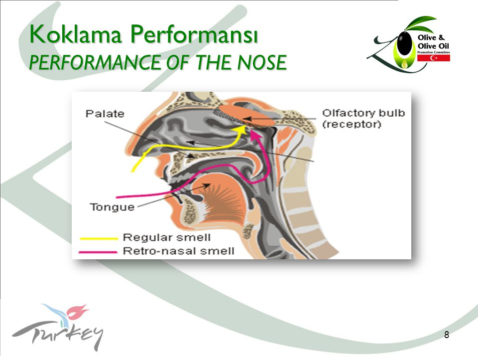 8 Koklama Performansı PERFORMANCE OF THE NOSE