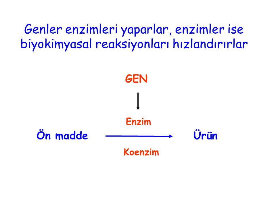 Ön madde GEN Ürün Enzim Genler enzimleri yaparlar, enzimler ise biyokimyasal reaksiyonları hızlandırırlar Koenzim