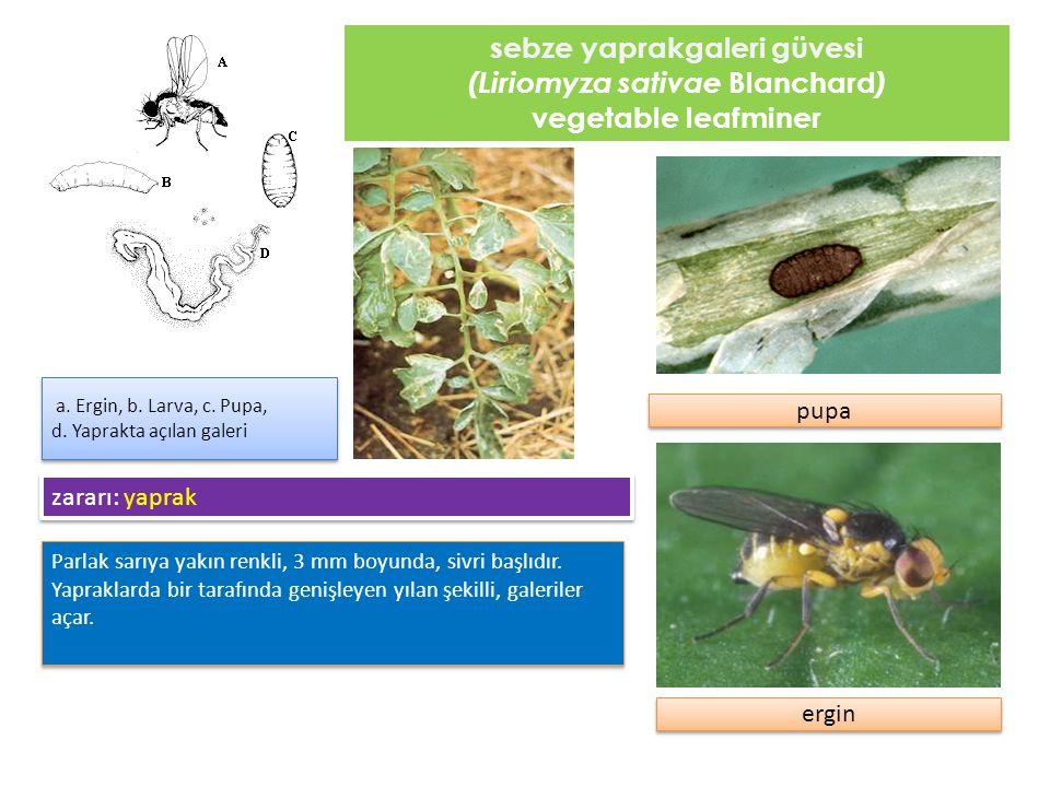 kınkanatlı böcekler ( Meloidae familyası) blister beetles Meloidae ailesinden yaklaşık 2500 böcek genel olarak kınkanatlılar olarak bilinir.