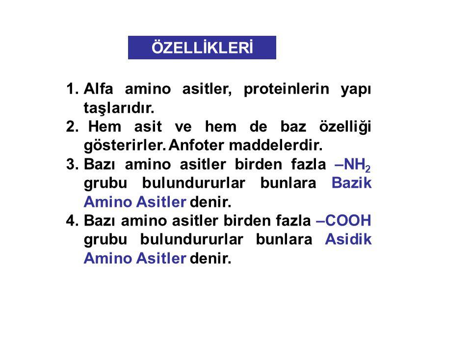 1.Alfa amino asitler, proteinlerin yapı taşlarıdır.
