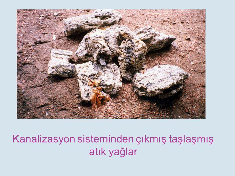 Kanalizasyon sisteminden çıkmış taşlaşmış atık yağlar