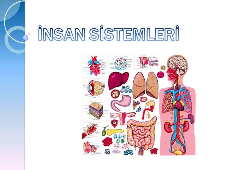 MERKEZİ SİNİR SİSTEMİ Merkezi sinir sistemi 100 Merkezi sinir sistemi 100 milyondan fazla nörondan milyondan fazla nörondan oluşmuştur.
